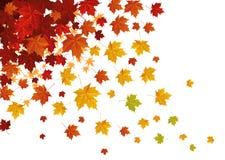 fallande leafs Arkivbild