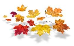 fallande leafs för höst Fotografering för Bildbyråer