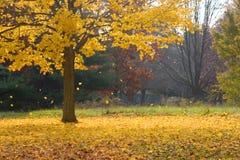 fallande leaves Royaltyfri Fotografi