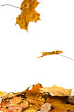 fallande leaves Arkivbild