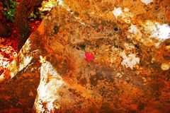 fallande leaves Arkivfoton