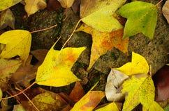 fallande leaves Fotografering för Bildbyråer