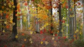fallande leaves för bakgrund lager videofilmer