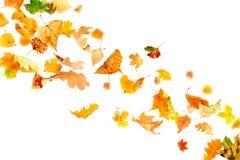 fallande leaves för höst Arkivbilder