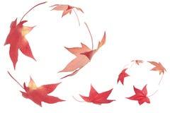 fallande leaves för höst Royaltyfri Fotografi