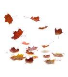 Fallande leaves för höst Royaltyfria Foton