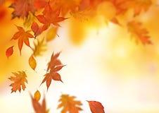 fallande leaves för höstbakgrund arkivbild
