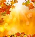 fallande leaves för höstbakgrund Arkivfoto