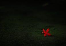 Fallande röd blomma i mörkret arkivfoto