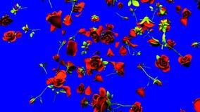 Fallande röda rosor på blå chromatangent stock video