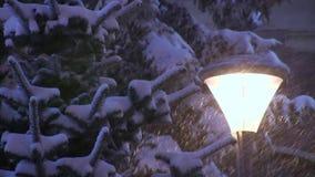 Fallande snö på snöig prydliga träd på vintern i häftig snöstorm stock video