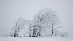 Fallande snö. Vinterträd stock video