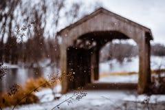 Fallande snödetalj Fotografering för Bildbyråer