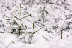 fallande snow Arkivbild