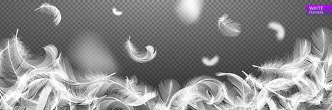 Fallande snurrade realistiska fjädrar som isoleras på en genomskinlig bakgrund Lätt stil, kan användas i reklamblad, baner, rengö Arkivfoto