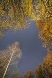 Fallande stjärna över höstträd arkivbild
