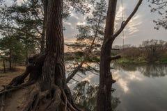 Fallande träd på floden Royaltyfri Bild