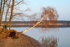 fallande tree Royaltyfria Foton