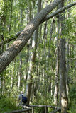 fallande trees arkivfoton