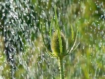 fallande vatten för droppar Royaltyfria Foton