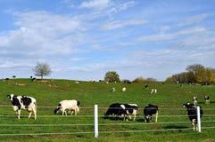 Fallansicht über einen Maryland-Bauernhof Lizenzfreie Stockfotografie