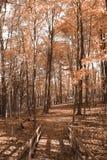 Fallbäume Lizenzfreies Stockfoto