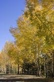 Fallbäume stockbilder