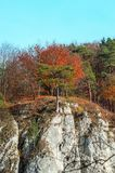 Fallbäume auf einem Felsen stockbild