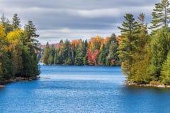 Fallbäume mit See stockfoto