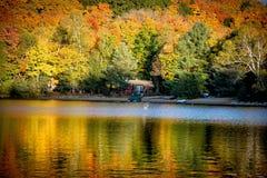 Fallbäume mit See stockbilder