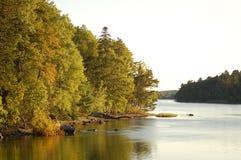 Fallbäume nah an Wasser in Maine Stockfotos