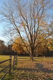 Fallbäume und -zaun Stockbild