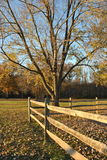 Fallbäume und -zaun Stockbilder