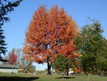 Fallbaum orange gebrannt Lizenzfreies Stockbild