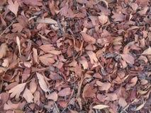 Fallbaumblätter Stockbild