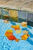 Fallblätter, die in Pool schwimmen stockfoto