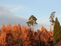 Fallblätter im Baum Stockfotos