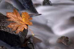 Fallblatt Stockfotos