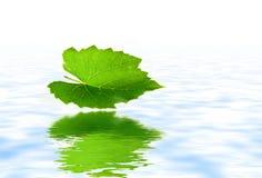 Fallblatt reflektiert im Wasser Stockbild