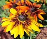 Fallblumen Stockfotografie