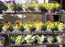 Fallblumen für Verkauf lizenzfreie stockbilder