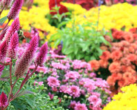 Fallblumen mit einer Biene Stockfoto