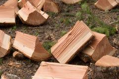 Fallbrennholz frisch aufgespaltet Stockbilder