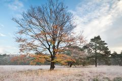 Fallbuchenbaum im Morgenfrost Lizenzfreie Stockfotografie
