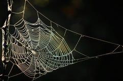 Falle, Schlinge, Haken, Gefahr, Fang, Spinnennetz gesponnenes Netz des spid Lizenzfreie Stockfotografie