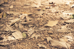 Falled dry leaf on soil floor with Vintage filter. 1 Stock Photo
