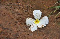 Falled flower. On the floor stock photography