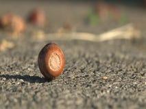 Fallen acorn stock footage
