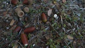 Fallen acorns royalty free stock images