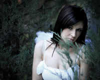 Fallen Angel_8 Stock Image
